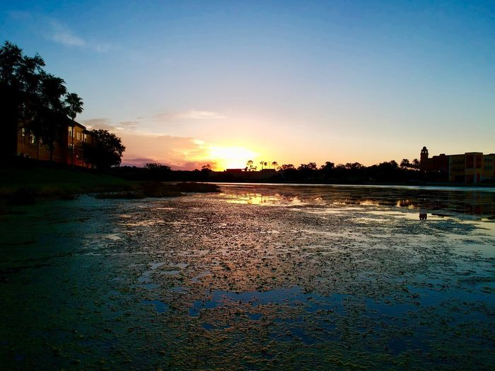 Orlando Florida Metrowest Sky Sunset Water Tree Plant Nature Scenics - Nature Beauty In Nature No People Tranquility Reflection Tranquil Scene Silhouette Outdoors Land Built Structure Idyllic Architecture Environment Swimming Pool
