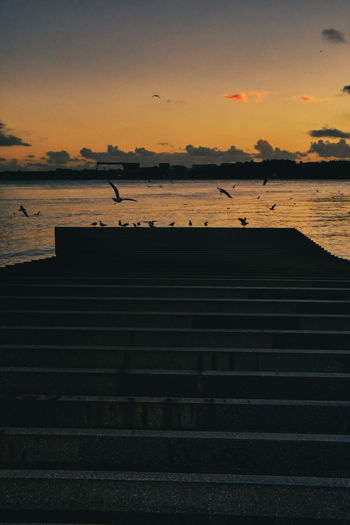 Silhouette of birds on sea during sunset