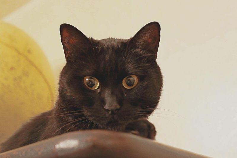 Kitty Kitten Kittens Kittenoftheday Cat Cat Lovers Cats Cat♡ Catsofinstagram Catoftheday Black Cat Black Cats Black Cat Is Just So Beautiful. Animals Animal