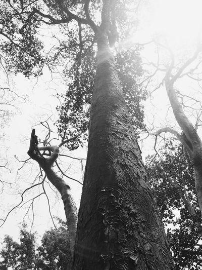 Cambodia Siemreap B&w Blackandwhite Explorecambodia Plant