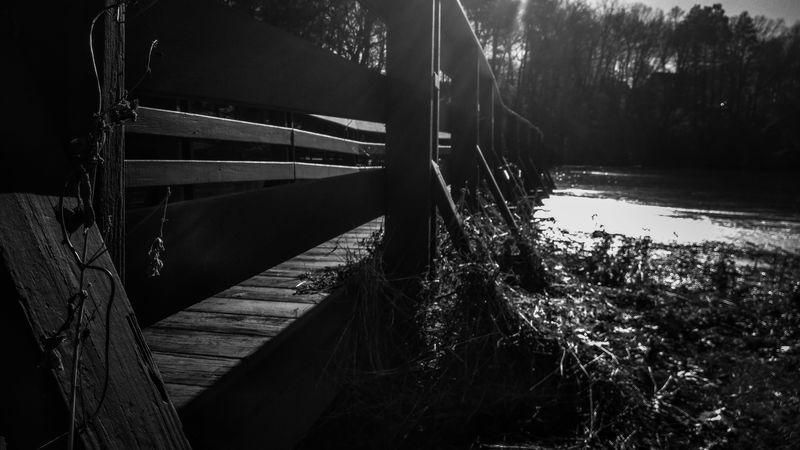 The Pond Bridge Black And White Photography Trees Shadow Different Perspective Perspective Autumm Water Tree Nautical Vessel Lake Reed - Grass Family