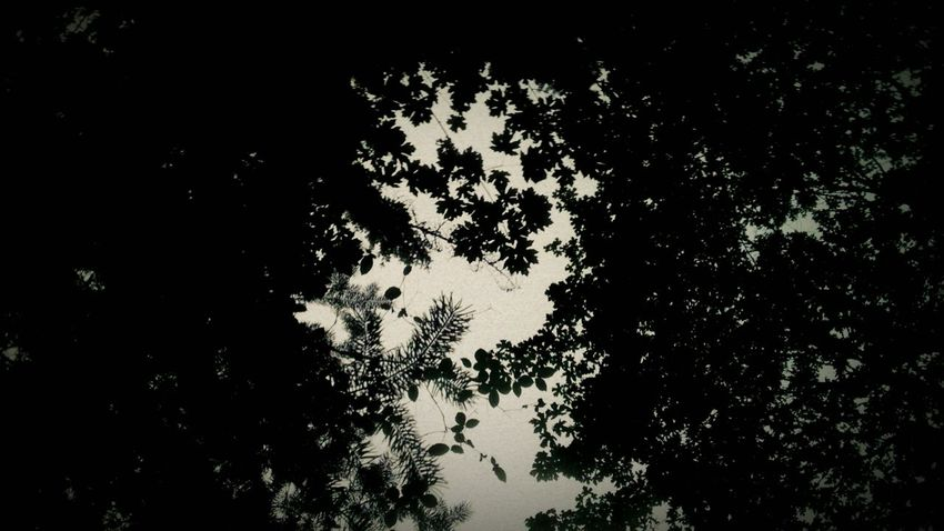 you keep looking but you can't find the woods.... while you're hiding in the trees Nine Inch Nails Trent Reznor With Teeth Trees