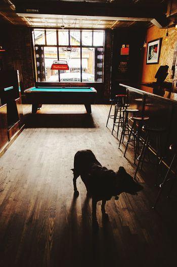 Doggy. Bar Pool