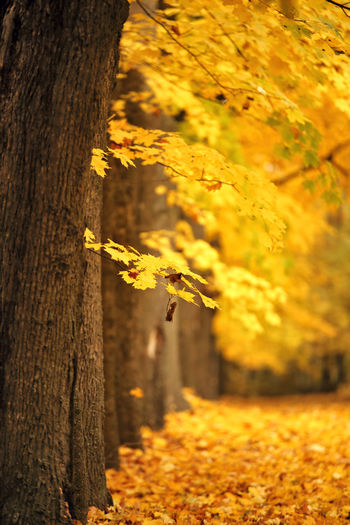 Close-up of yellow tree trunk during autumn