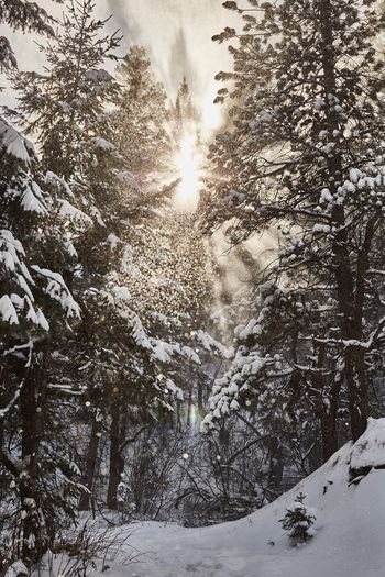 Hiking in Colorado and you look up and see this. #ClayHaynerPhoto Travelling Travel Photography Travel Destinations Travel Sunlight Nature ClayHaynerPhoto Wanderlust Winterwonderland Winter Trails Hiking Forest Trees Snow Forest Beauty In Nature Outdoors No People Sunlight Sun Snowflake Snowing