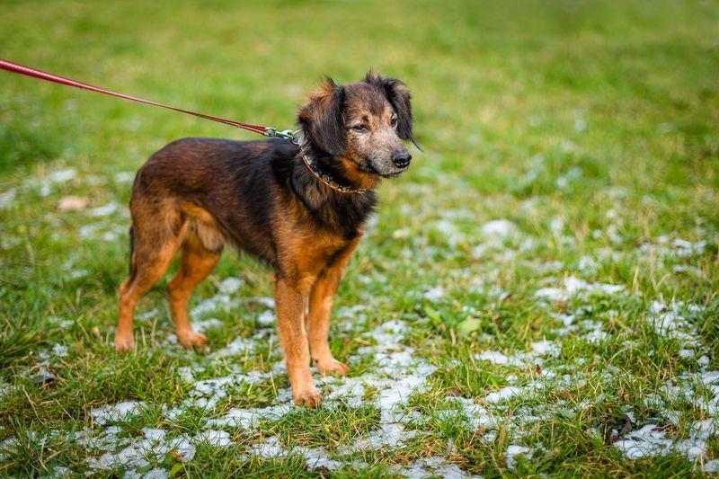 Dog looking away on field