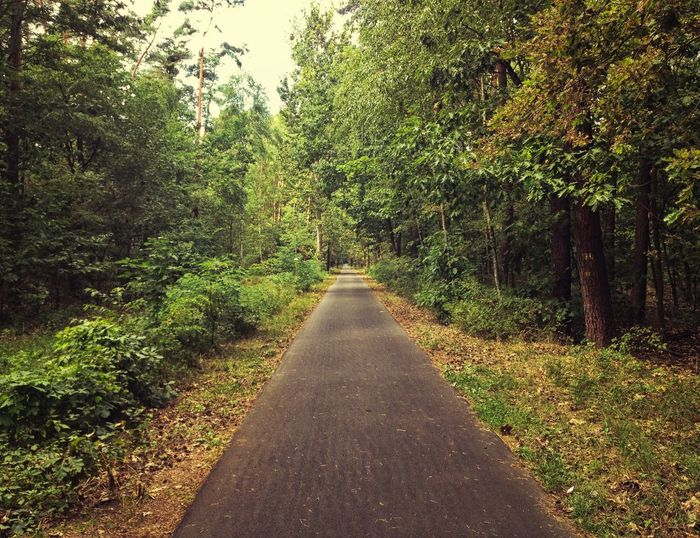 Scenic and serene forest path during summer season. Beauty In Nature Day Forest Green Green Color Green Color Landscape Landscapes Lush Foliage Nature Nature No People Outdoor Outdoors Path Relax Relaxing Road Scenics The Way Forward Tranquil Scene Tranquility Tree Trees Woods