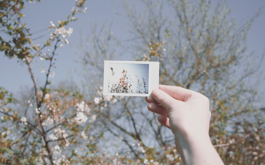 Good morning 🌷🌞. Nature Nature_collection Human Hand Sky Outdoors Flowers Blooming Spring Springtime Sunlight Polaroid Human Body Part Holding Adults Only People Simplicity Beauty In Nature Taking Photos Shootermag EyeEm Best Shots Mix Yourself A Good Time