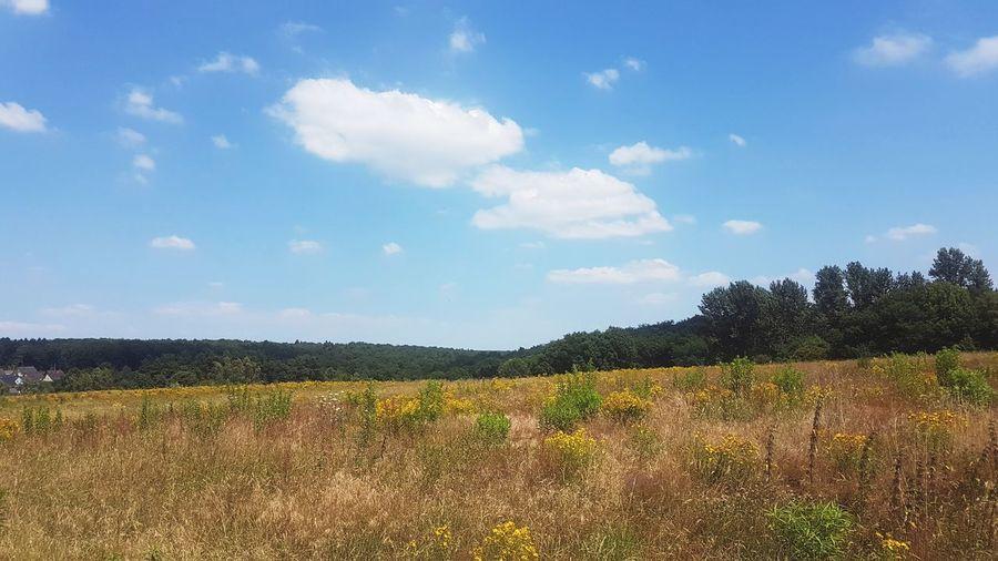 Wunderschöne Aussicht EyeEmNewHere Flowerpower EyeEm Nature Lover EyeEm Best Edits Shotongalaxys7edge Tree Rural Scene Agriculture Field Crop  Sky Landscape Cloud - Sky Plant Corn Corn - Crop Plantation