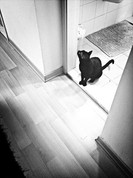 Blackandwhite Gray guarding the bathroom door!