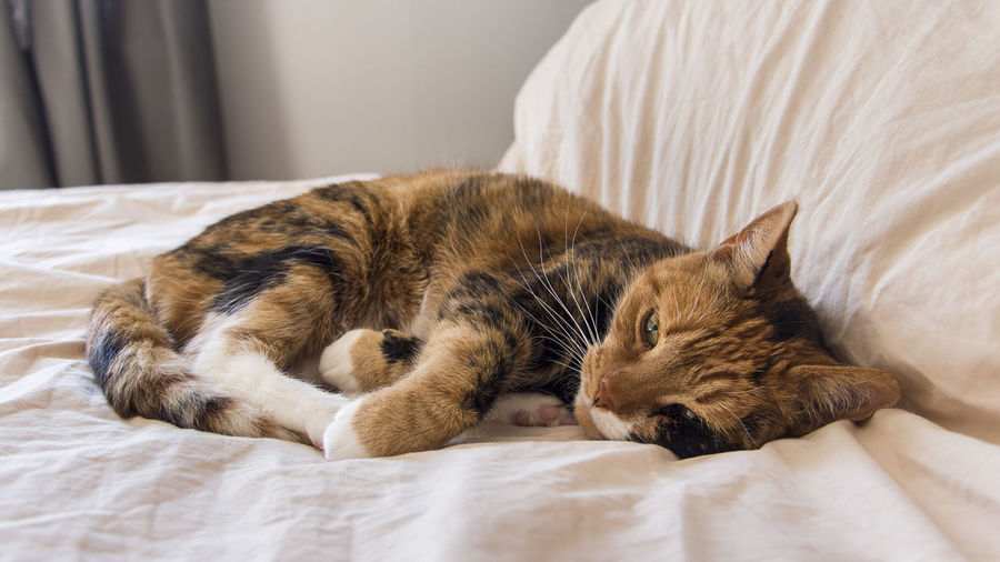 Close-up of cat relaxing on bed at home