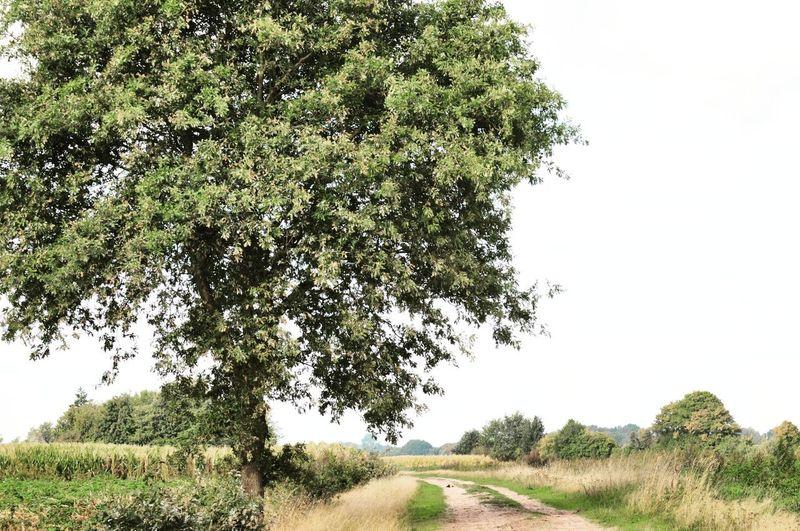 Farm fields. Tree Clear Sky Branch Sky Landscape Cultivated Land Agricultural Field Farmland Plantation