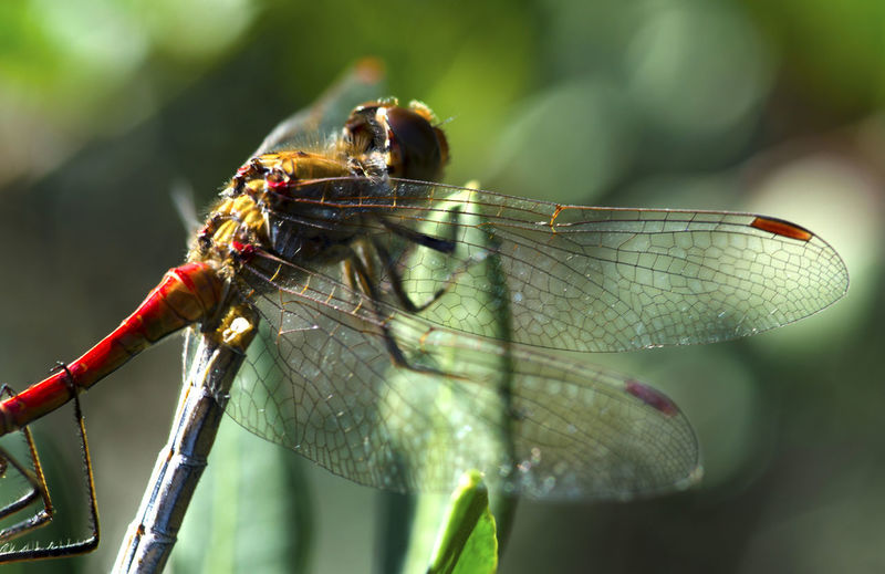 Dragonfly Animal Themes Animal Wildlife Animals In The Wild Beauty In Nature Close-up Damselfly Day Focus On Foreground Insect Leaf Mayfly Nature No People One Animal Outdoors Macro Insects EyeEmNewHere