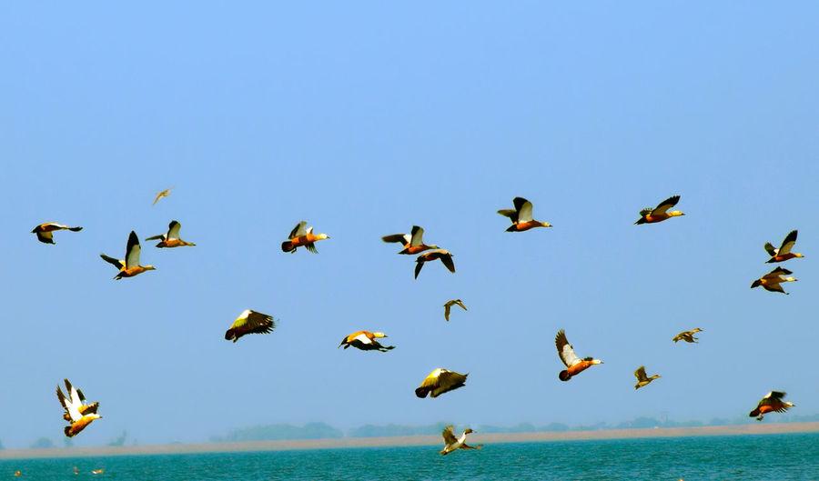Flock of birds flying above sea