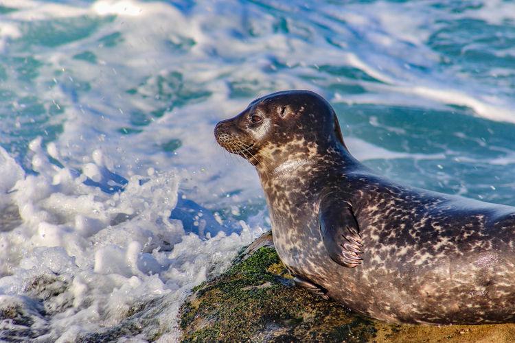 Sea lion by sea