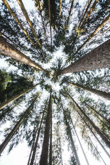 Showcase: February Nature Nature_collection Trees Forest Lookingup Sky