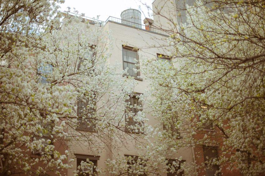 Lariverola NYC Spring