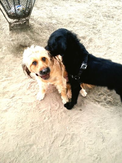 Bagira and luna 🐶❤😊 Friendship Dog Love Bagira Blackandbrown