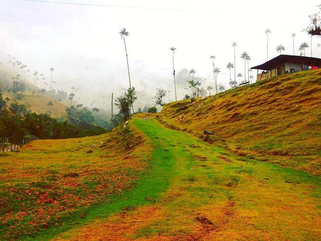 Cocora Valley, Colombia. Cocora Valley Colombia Coffee Region Landscape Landscape Photography Nature Travel Travel Photography EyeEmNewHere EyeEmNewHere