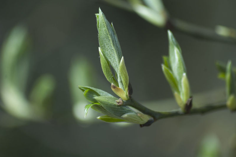 Close-up Day Focus On Foreground Green Green Color Growth Leaf Nature Outdoors Plant Selective Focus