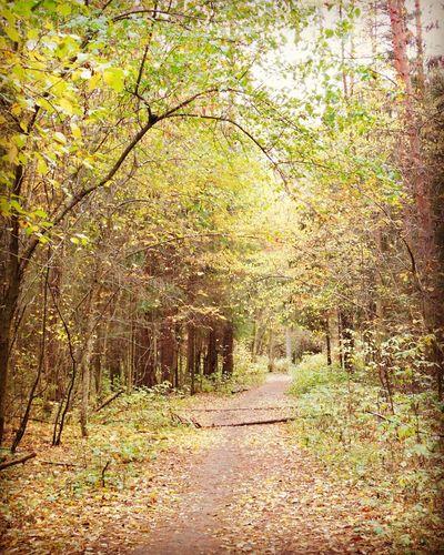 Perm Perm' гуляем отличное настроение балатовский лес осень