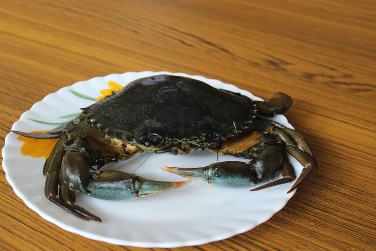 High angle view of crab in plate
