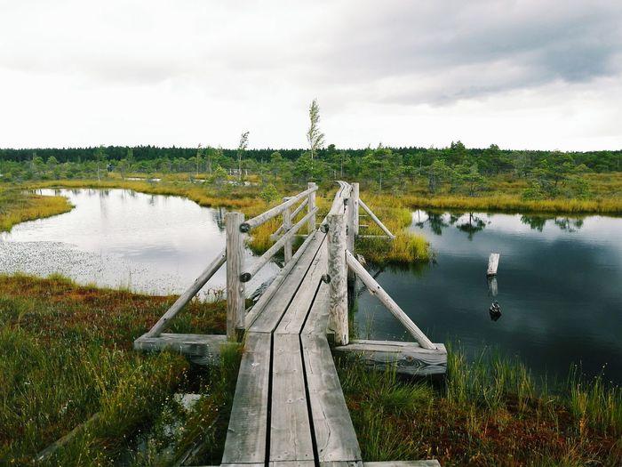 Blackandwhite Bridge Nature Photography Swamp Beautiful