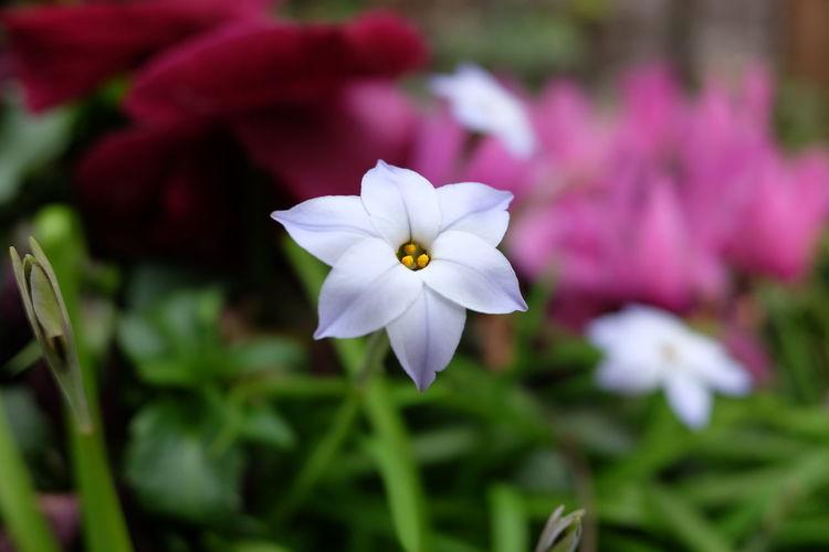 Flower Head Flower Petal Springtime White Color Close-up Plant