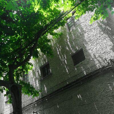 Shanghai Shanghai, China Shanghai Streets Sunshine Trees Leaves Good Weather Shadow Shadows & Lights