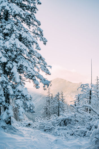 Snow Cold Temperature Winter Tree Nature Tranquil Scene Scenics - Nature Landscape Mountain Outdoors Sunset
