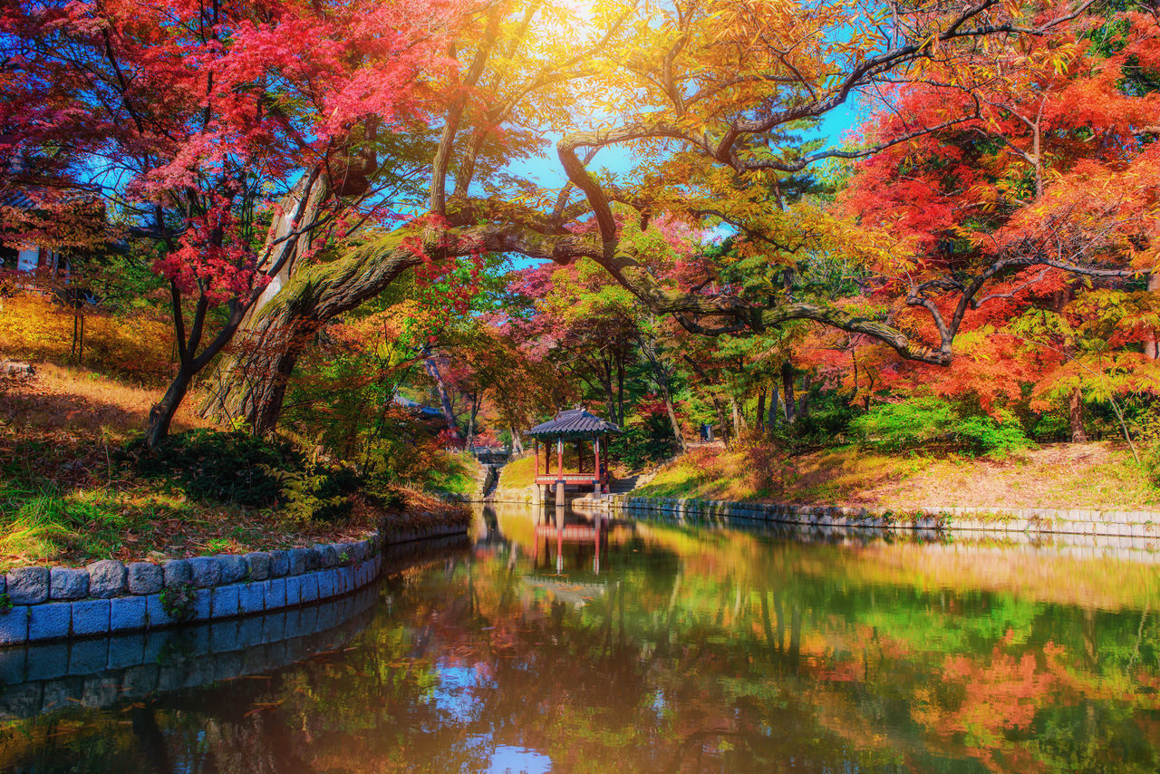 tree, autumn, water, plant, reflection, lake, change, nature, built structure, tranquility, architecture, waterfront, tranquil scene, beauty in nature, scenics - nature, day, no people, growth, building exterior, outdoors