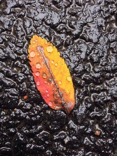 autumn Autumn Leafs Nature_collection Rain