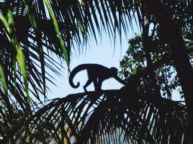 Manuel Antonio Costa Rica Monkey Travel Photography Traveler
