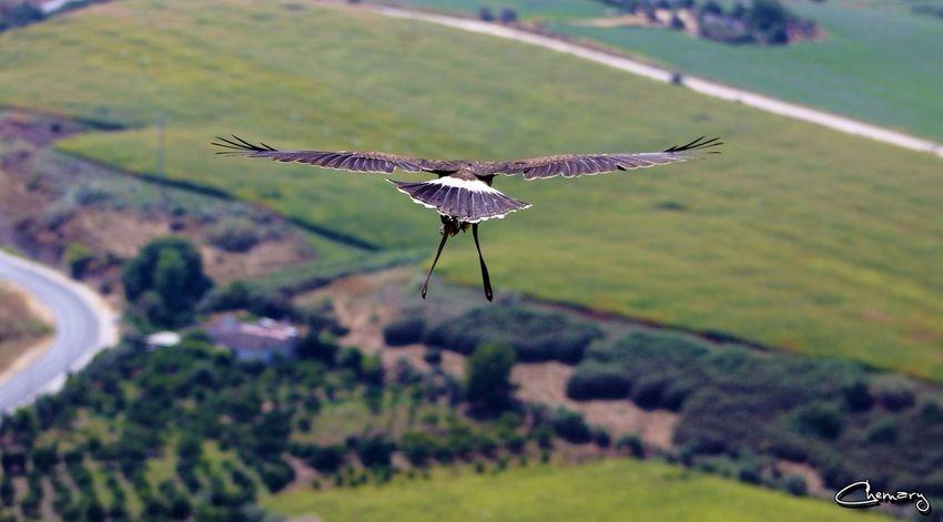 Beauty Nature Impossible Moments picture took in Cadiz, Spain. More at cuatropajarracos.blogspot.com.es