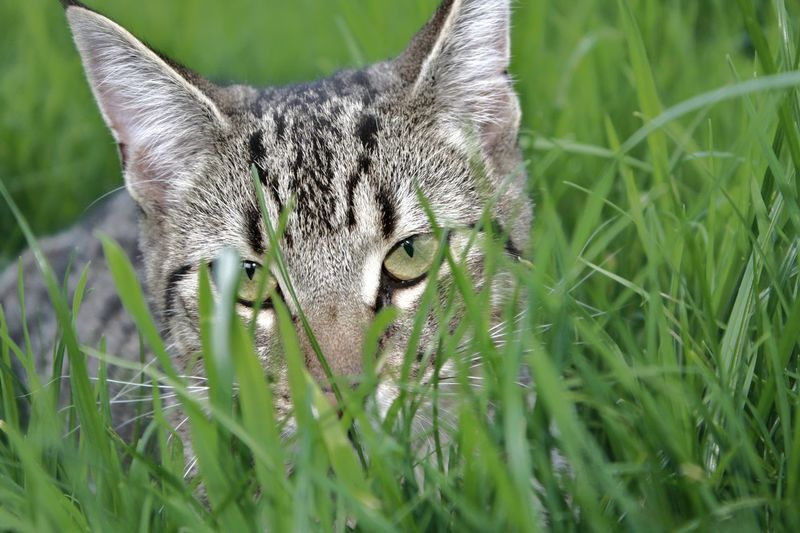 Animal Themes Animal Wildlife Animals In The Wild Cat Close-up Day Field Grass Green Color Growth Kitten Kitten 🐱 Kittenoftheday Mammal Nature No People One Animal Outdoors Pet Pet Photography  Plant Pet Portraits