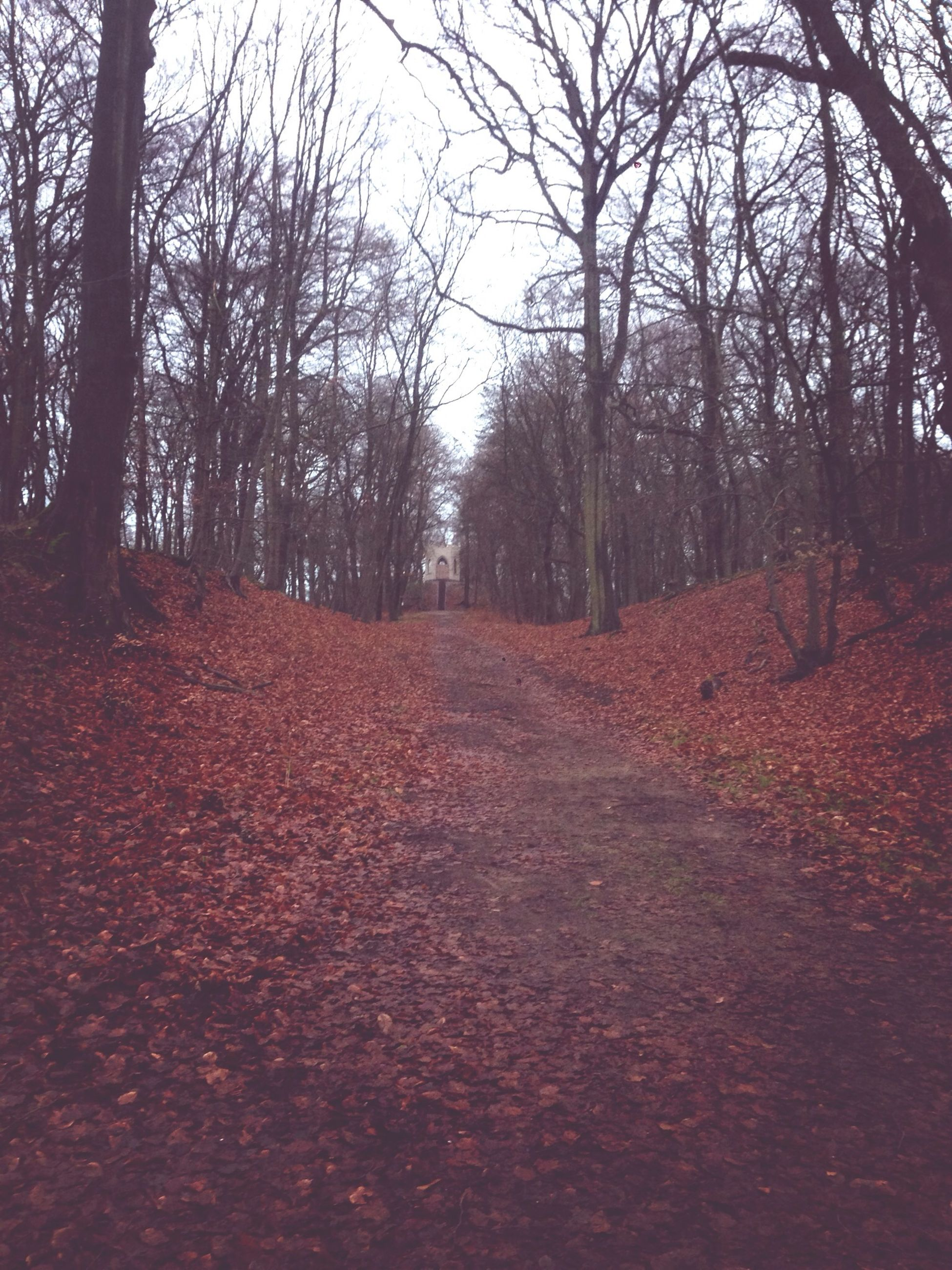 tree, tranquility, tranquil scene, the way forward, autumn, bare tree, nature, landscape, scenics, beauty in nature, forest, change, dirt road, branch, tree trunk, growth, non-urban scene, season, diminishing perspective, outdoors
