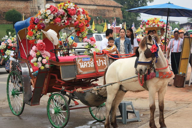 Carriage Horse Carriage Lampang | Thailand Travel