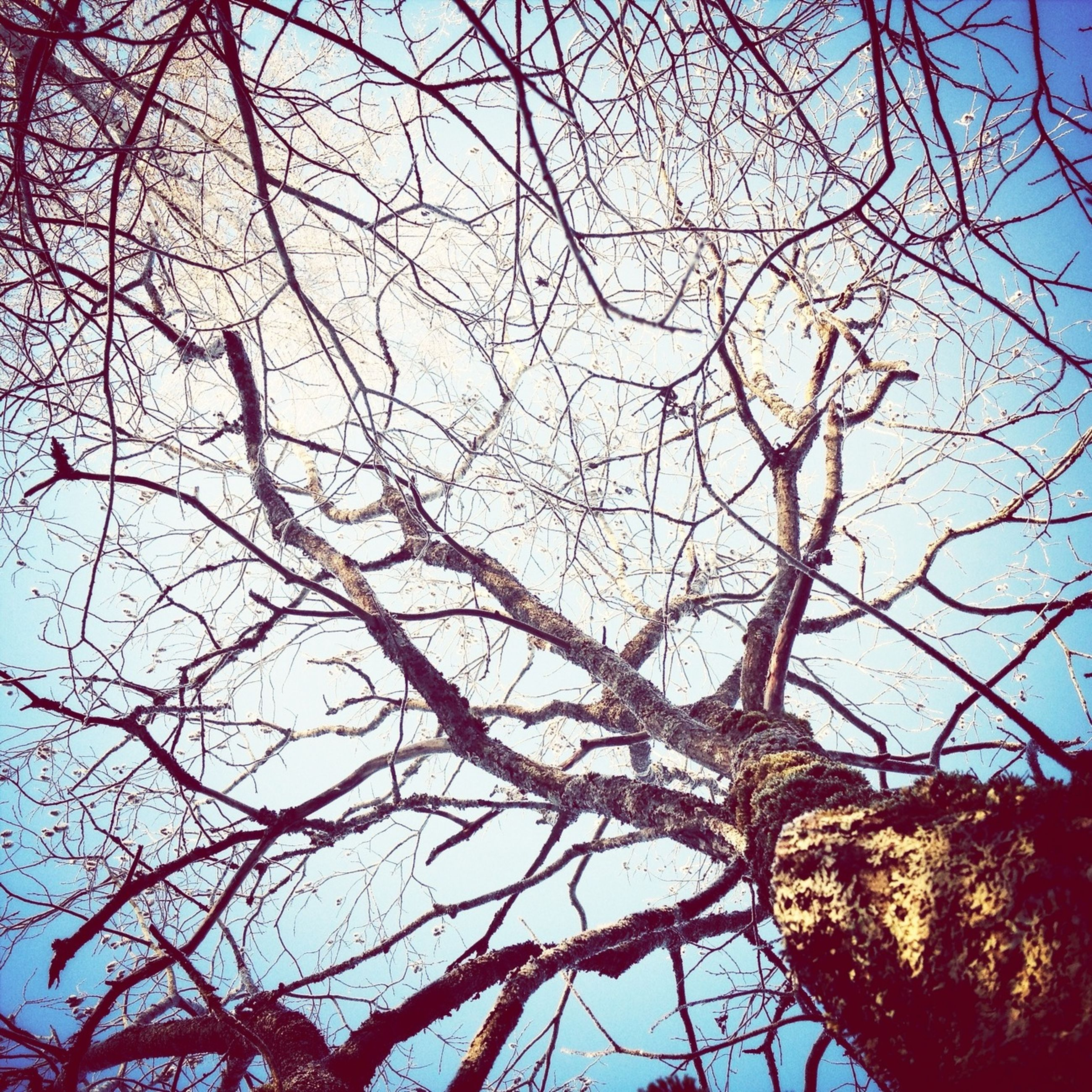 branch, bare tree, tree, low angle view, sky, nature, tranquility, clear sky, beauty in nature, silhouette, scenics, no people, outdoors, tree trunk, blue, growth, day, dusk, tranquil scene, dead plant