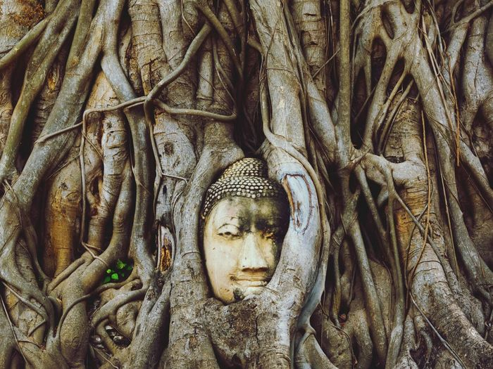 Buddha statue in tree roots