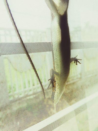 宿舍出现的外来生物…