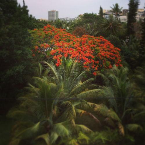 Architecture Flamboyant Ile Des Pins Noumea Nouvelle Calédonie Rough Trees Vert