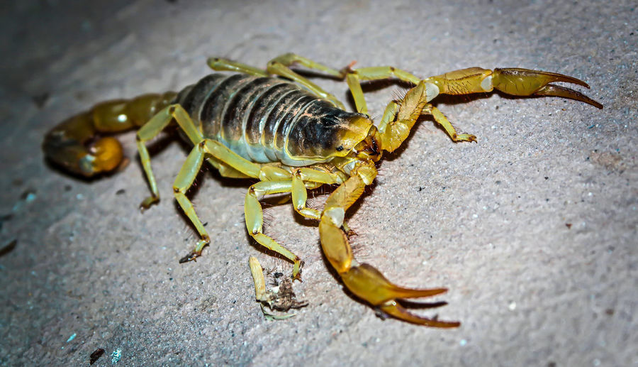 Close-Up Of Scorpion On Footpath