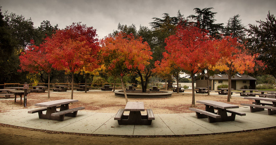 Empty benches by trees in park during autumn