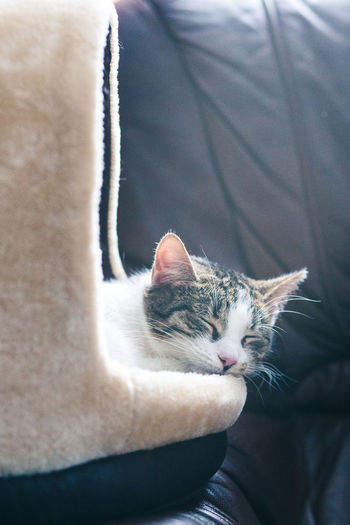 Cat sleeping in a cat bed on a couch