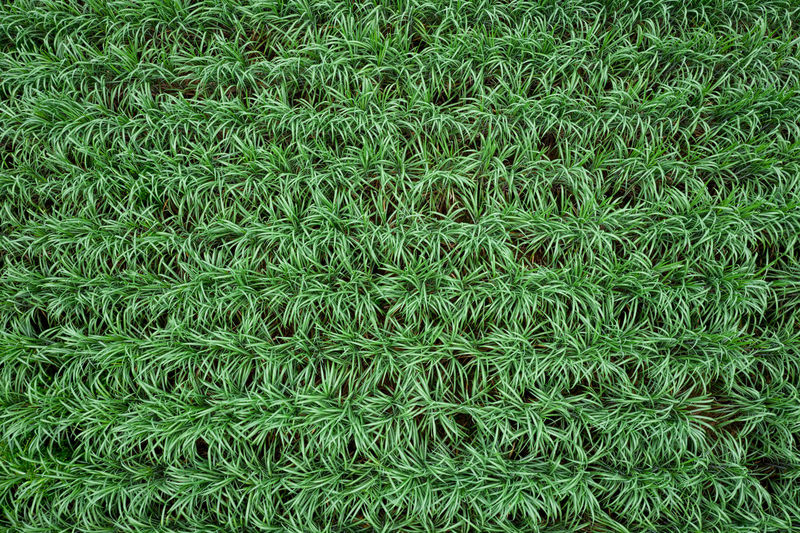Full frame shot of green plant on field
