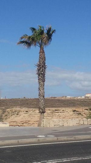 Tree Palm Tree Beach Desert Sand Sky