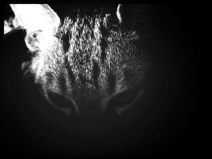 il est sensé être caché ^^ Cat Love Jeu Cache Cache
