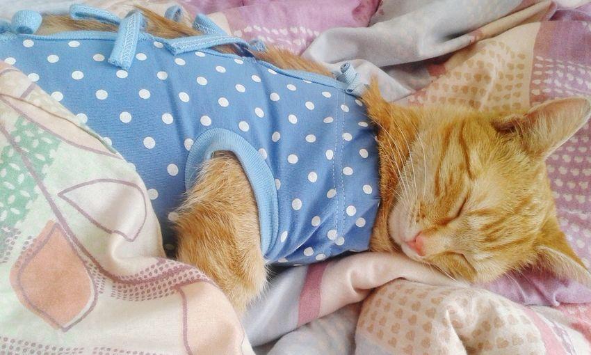 """Cat♡"""" Moja Malutka :* Otóż Taki Niebieski Kaftanik Dostała Od Weta :) """" 💞"""