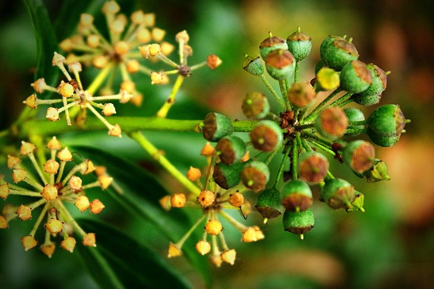 Photography Growth Plant No People Close-up Focus On Foreground Green Color Nature Beauty In Nature Change Autumn Colours