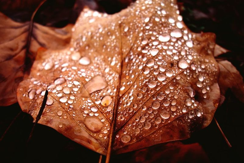 Close-up of raindrops on wet leaves